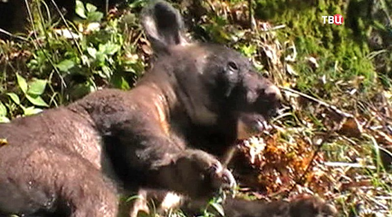 основные признаки пьяная медведица в хабаровске видео рассмотрели требования
